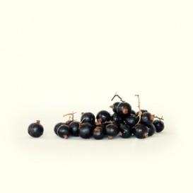 Grosella Negra de agricultura tradicional