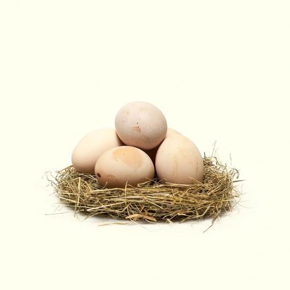 Si quieres comprar huevos camperos online, los huevos de Gallina de Mos de David y Jorge son los mejores que encontrarás.