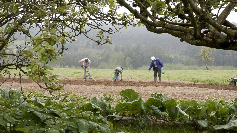 Si quieres comprar patatas gallegas kennebec no encontrarás mejores patatas online que las de cultivo tradicional, patatas pre-ecológicas.